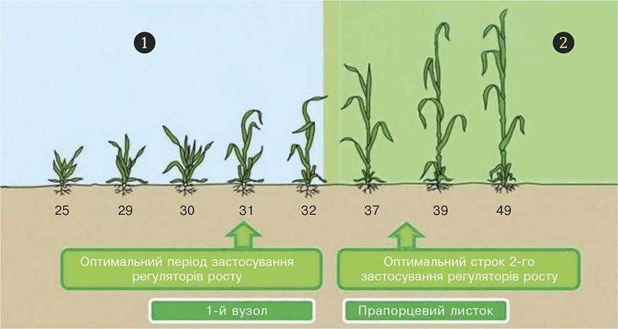 Рис. 6. Стратегія застосування регуляторів росту