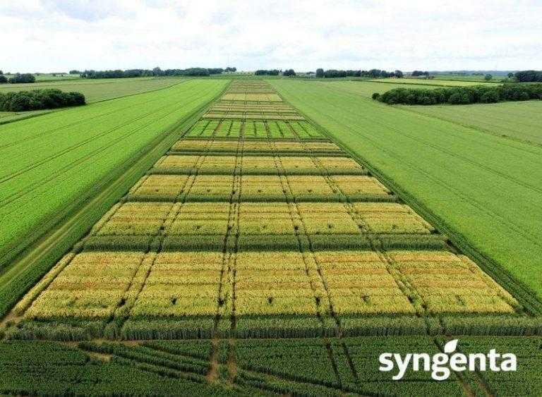 Syngenta розробляє методологічні кроки задля сталого розвитку