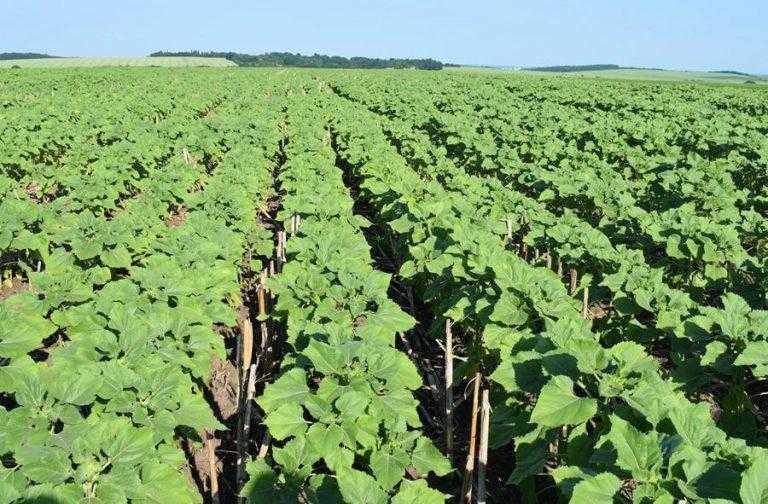 Тіатрин – захист насіння 360°