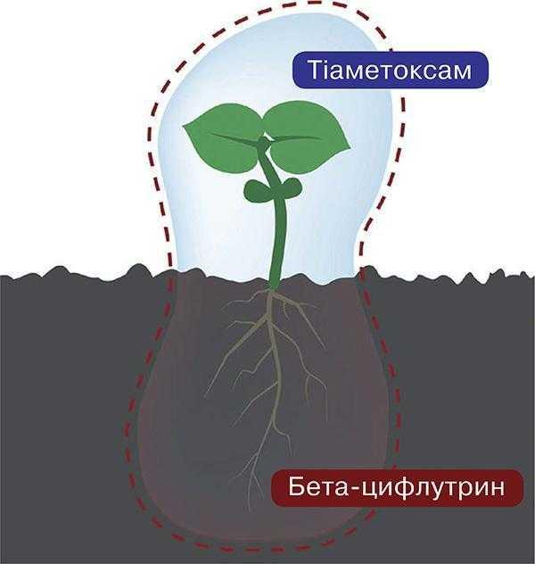 Тіатрин – захист насіння 360°_1