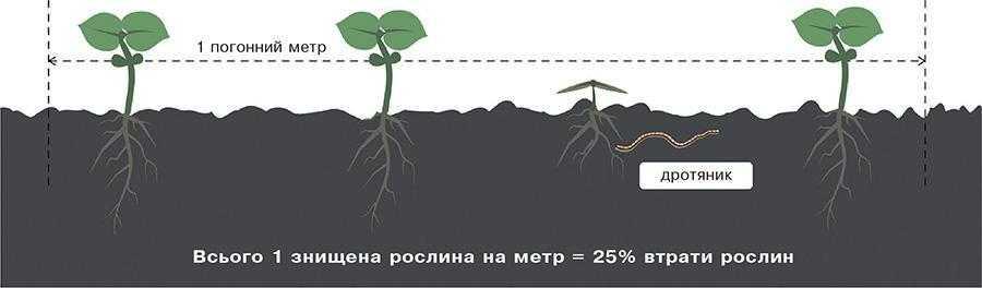 Тіатрин – захист насіння 360°_2