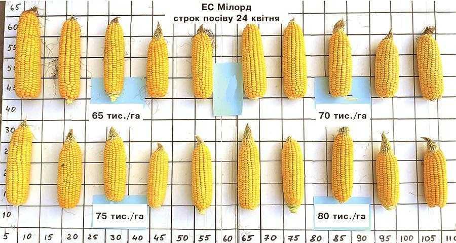 Урожайність гібридів кукурудзи в перерахунку на 14% вологості зерна в залежності від густоти і строків посіву (Калинівський р-н Вінницької обл.)
