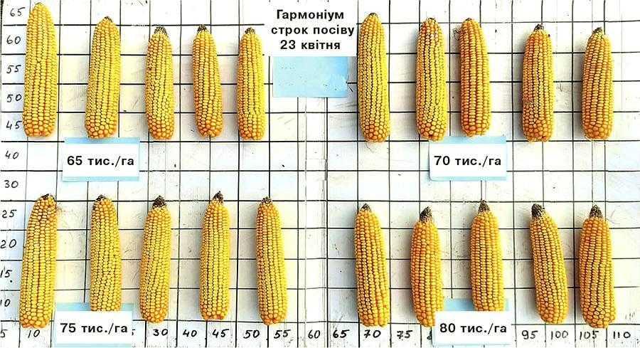 Урожайність гібридів кукурудзи в перерахунку на 14% вологості зерна в залежності від густоти та строків строків посіву (Заліщицький р-н Тернопільської обл.)