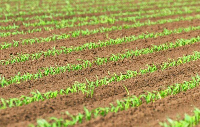 В майбутньому все насіння буде оброблятись біопрепаратами