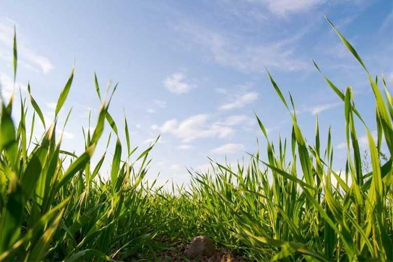 Фітосанітарний стан посівів на 18 березня