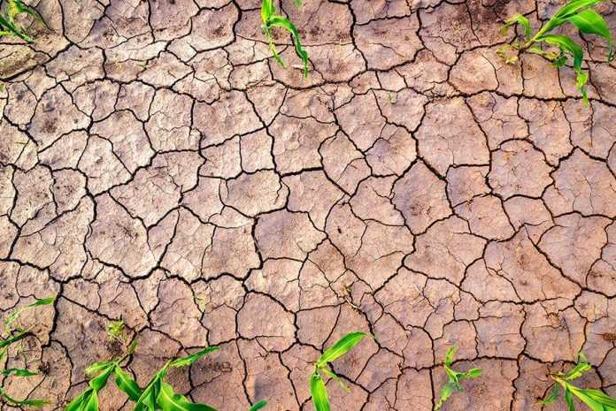 Чому ми відстаємо з урожайністю