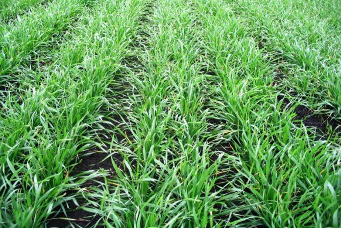 Фітосанітарний стан посівів та садів на 19 квітня