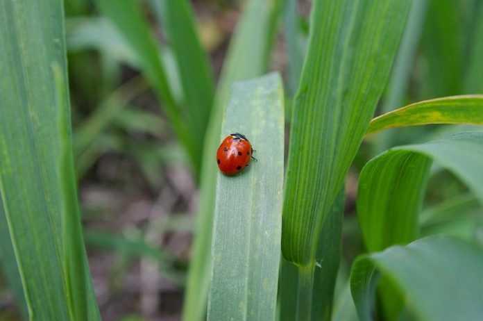 Фітосанітарний стан посівів та садів на 5 квітня