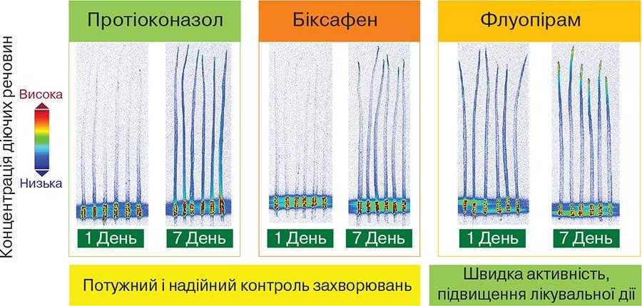 Системні властивості Аскра® Xpro забезпечують посилений контроль захворювань зернових культур
