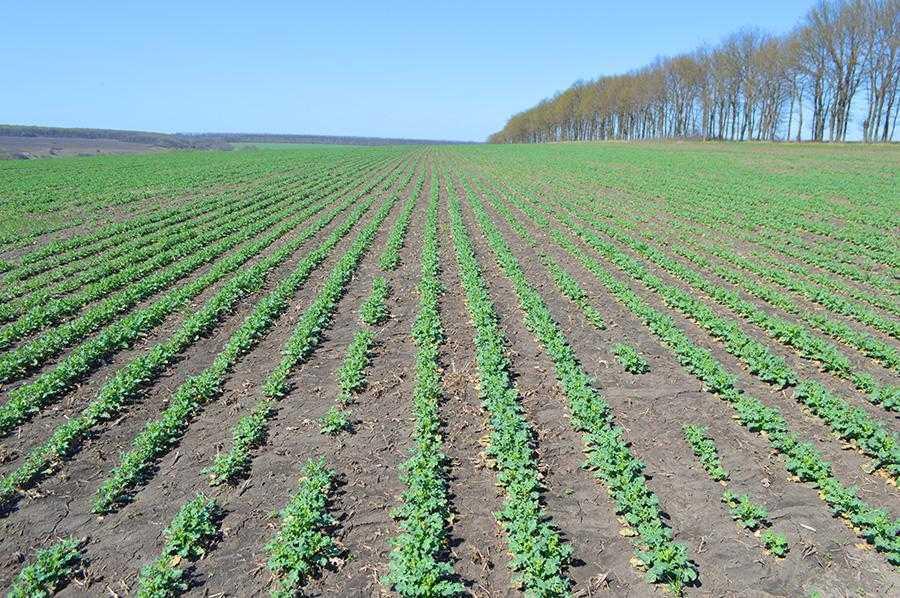 У разі, якщо рН грунту становить 5,5, рослини можуть засвоїти не більш як 70% наявних у ґрунті азоту і калію, до 50% кальцію та магнію і лише 10% фосфору