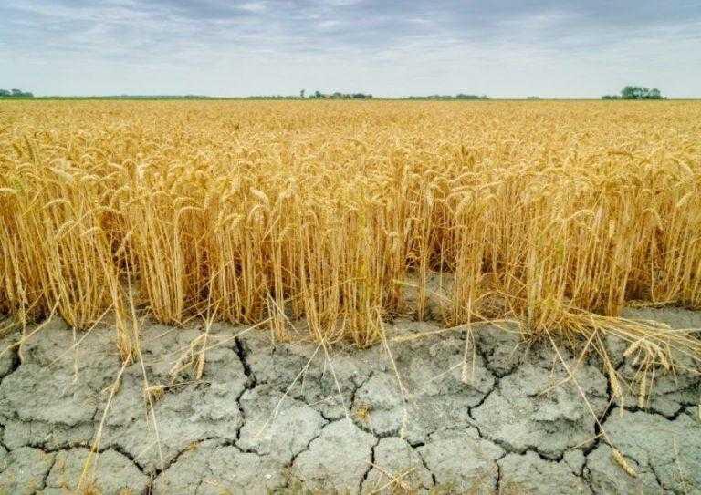 Як за останні 60 років зміни клімату вплинули на урожайність агрокультур