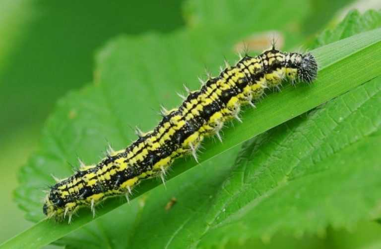 Як зменшити розвиток стійкості шкідливих комах до інсектицидів