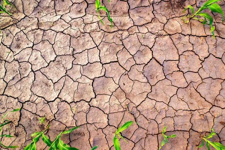 Чому ми відстаємо з урожайністю? Наслідки посухи чи людський чинник