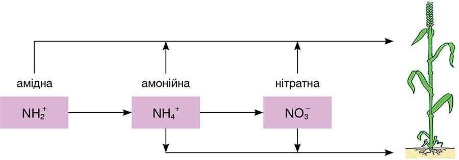 Рис. 3. Три форми азоту в розчинах КАС