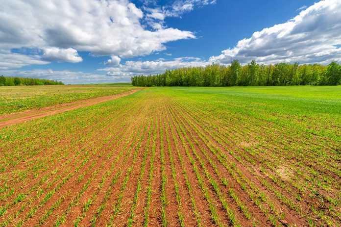 Застосування позакореневого підживлення в технології вирощування пивоварного ячменю