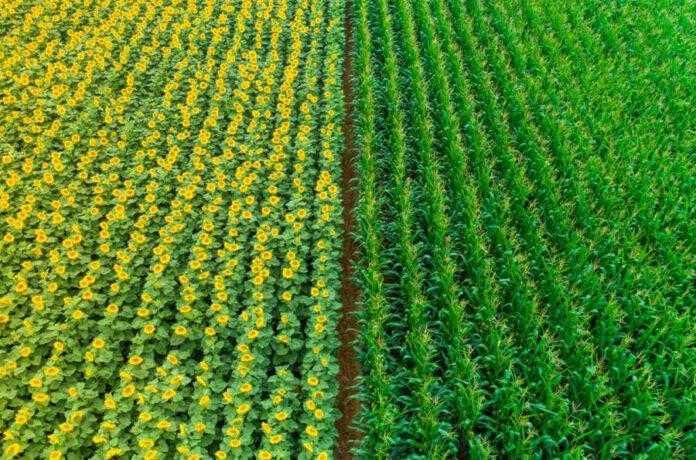 Бор функції та підходи до збільшення його доступності рослинам