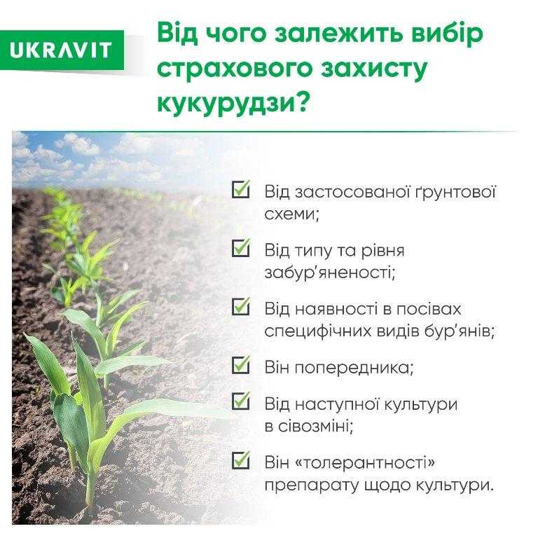 Від чого залежить вибір страхового захисту кукурудзи