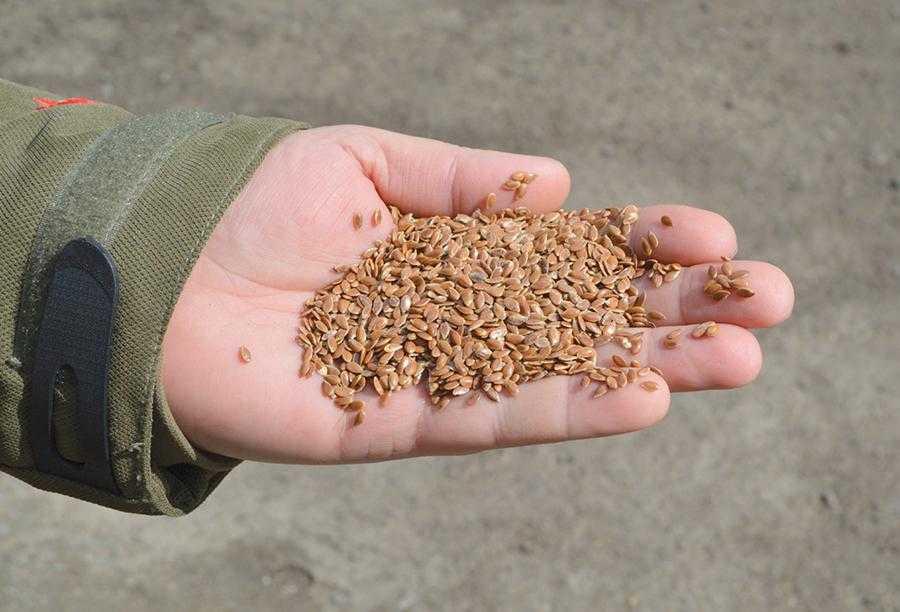 Майже 70% врожаю льону вдається продати в Україні, навнутрішню переробку. Решту – на експорт