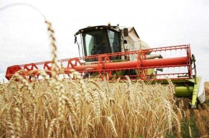 На півдні України стартували жнива ранніх зернових