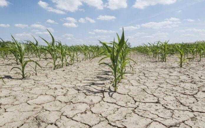 Українські аграрії господарюватимуть у зоні надвисоких температур і природних катаклізмів