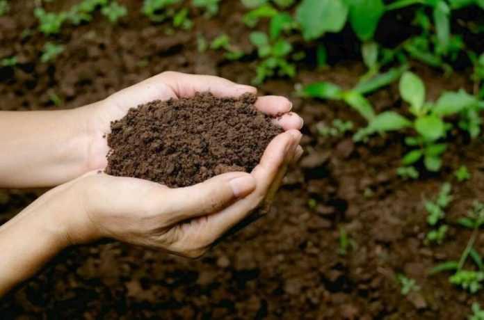 Відкрито просту суміш, яка знищує шкідників і підвищує урожайність культур