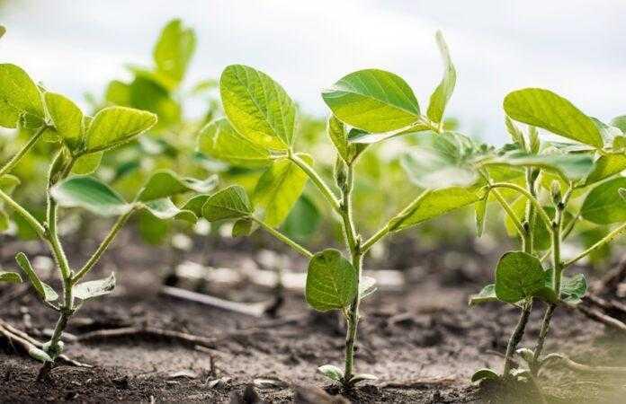 Corteva Agriscience та Symborg оголосили про угоду в галузі азотофіксації на основі мікробів