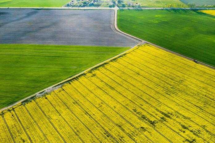 Індекс NDVI як він робить життя агронома простішим