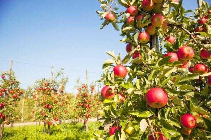 Новинки та перевірені рішення зможуть надійно захистити садові насадження від кліщів