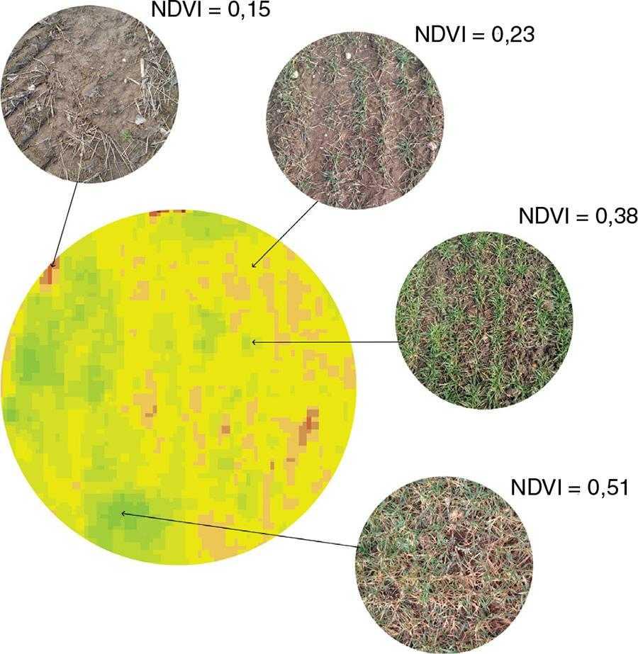 Ось як співвідноситься відображення NDVI у веб-платформі OneSoil і реальний стан рослин на полі