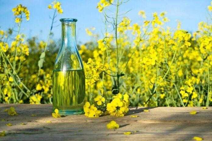 ТОП-5 найбільших виробників ріпакової олії: кому належать ці підприємства
