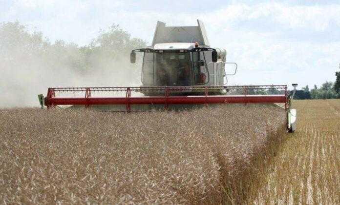 В Україні почали збирати ріпак: якість та урожайність радують