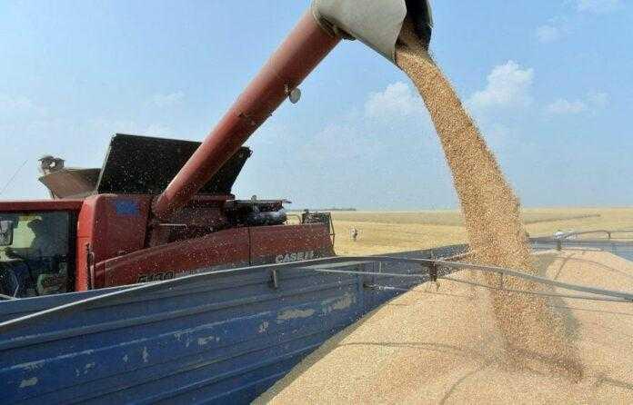 В українських аграріїв є всі шанси зібрати рекордний урожай