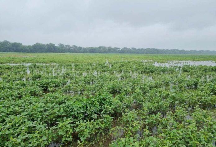 Через зливи втрати урожаю у деяких регіонах складають понад 50%