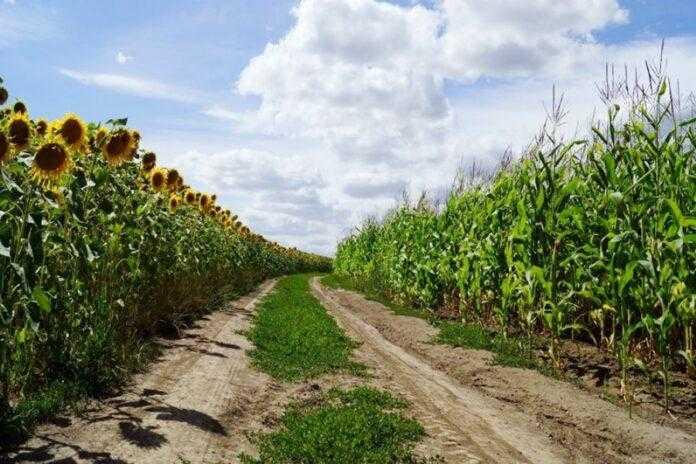 Чотири відомі компанії об'єдналися і створили AGROконцентрат