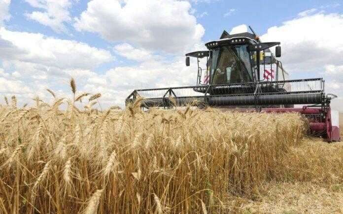 Названо регіон України із найвищою урожайністю зернових