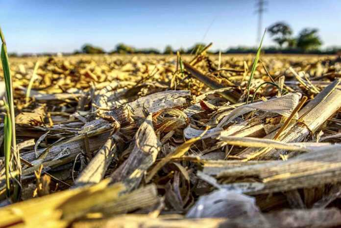 Непродуктивні гектари засолення й осолонцювання ґрунтів