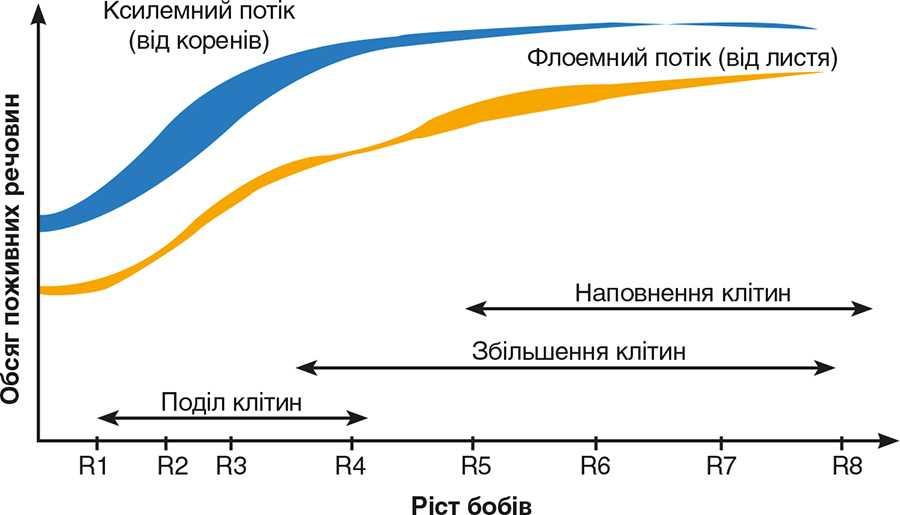 Природний фізіологічний процес розвитку