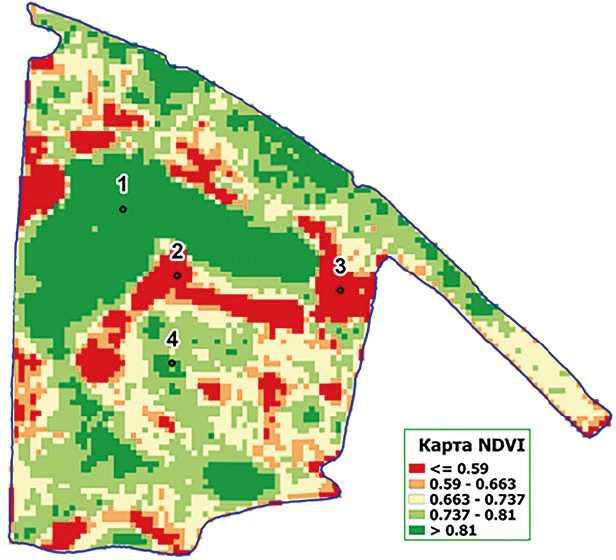 Схема відбору зразків ґрунту (на основі карти NDVI від 02.07.2019)