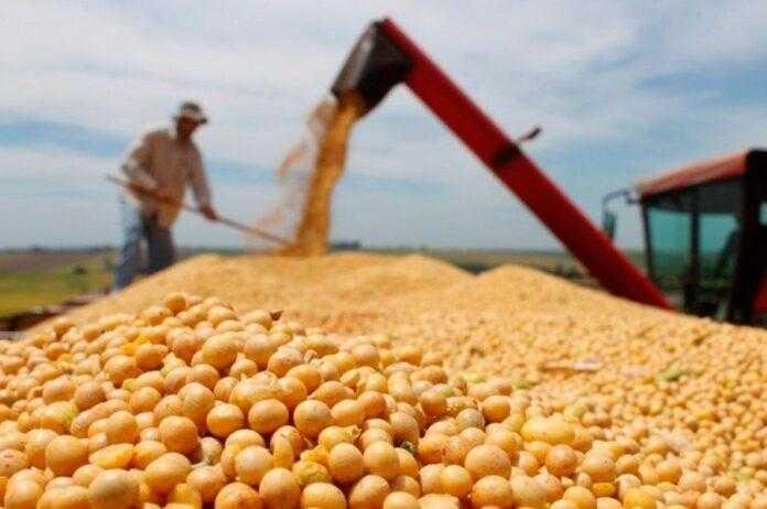 В очікуванні нового урожаю за ГМО-сою вже пропонують 500 $ за тонну, без ГМО – 620 $