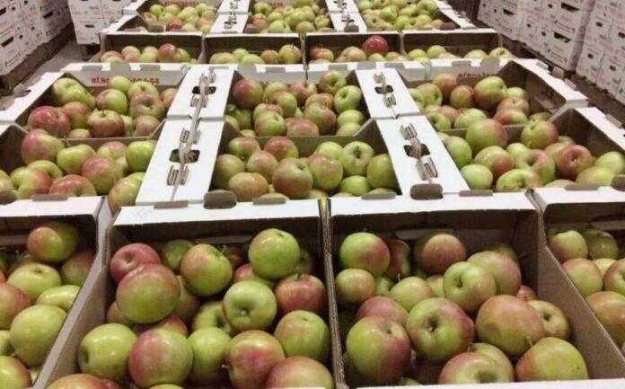 Від чого залежить втрата ваги овочів та фруктів під час зберігання