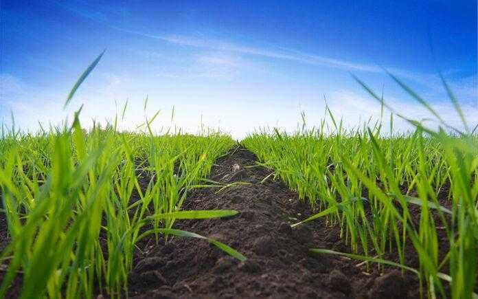 Вінцит® Форте – ваше насіння готове до будь-яких умов!