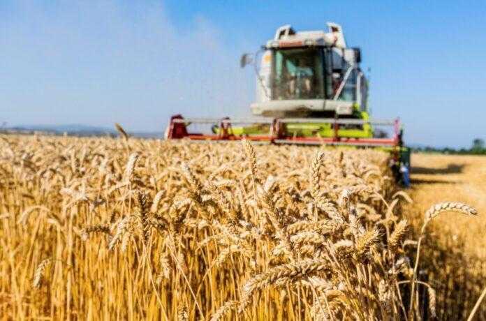 Збирання зернових на півдні