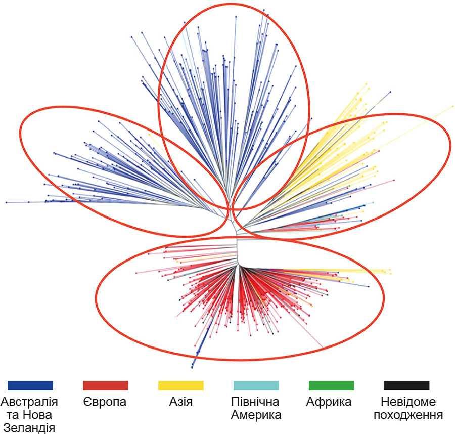 Рис. 2. Генетичне різноманіття сучасних гібридів ріпаку та їх географічне походження