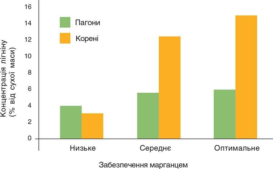 Рис. 3. Вплив марганцю на концентрацію лігніну в пагонах і коренях рослин пшениці (Marschner, 2012)