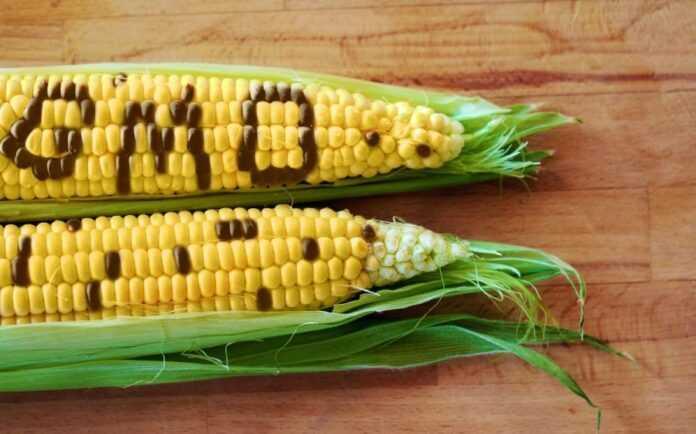 Zarubizhni-vcheni-nazvaly-osnovni-agrumenty-za-i-proty-vyroshhuvannya-GMO-kultur