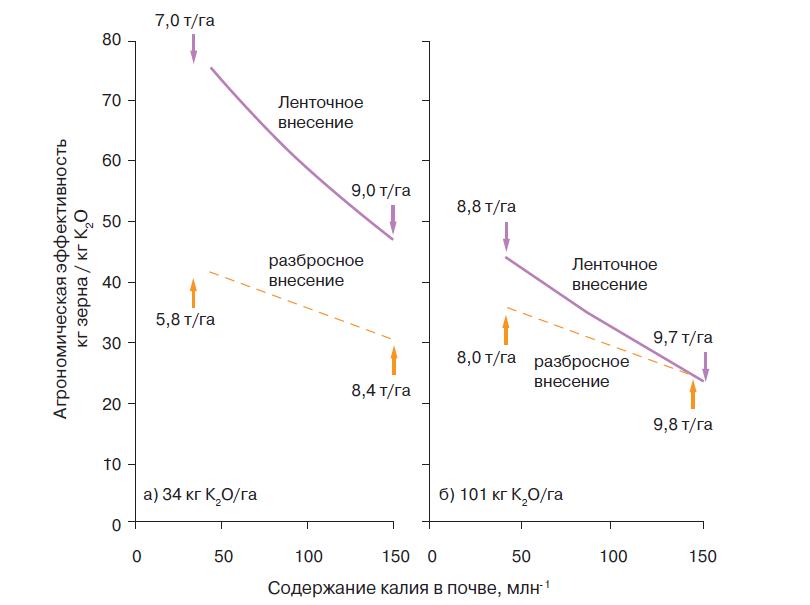Рис. 1. Агрономическая эффективность применения калийного удобрения под кукурузу при ленточном и разбросном внесении в дозах: а) 34 кг К2О/га и б) 101 кг К2О/га. Для каждого способа внесения приведена расчетная урожайность при низком и высоком содержании калия в почве