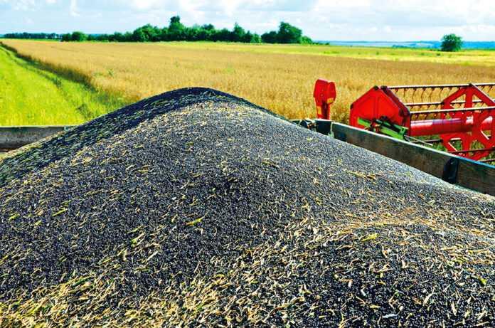Способи підвищення врожайності ріпаку озимого